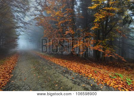 deserted road autumn forest