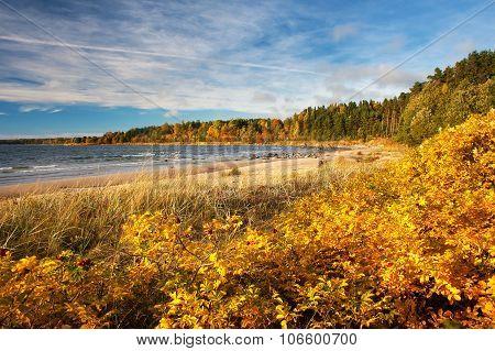 Coastal landscape in autumn