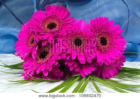 Bouquet Of Purple Gerber With A Blue Background