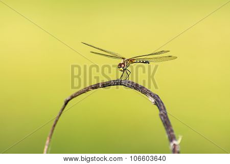 Dragonfly With Blur Beatiful Nature Background