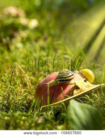 Snails On An Apple