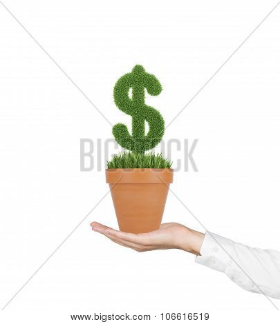 A Hand Holds A Flowerpot With Grass Green Dollar Sign. Isolated On White Background.