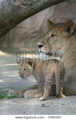 Lions 45