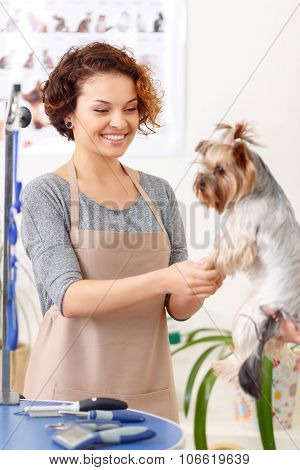 Female groomer starts to work on her pet client.