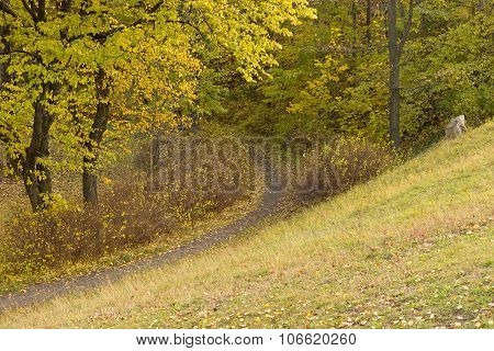Path in the autumn woods