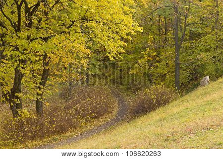 Path in the woods on an autumn day