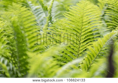 Spring Fern Texture For Backgrounds