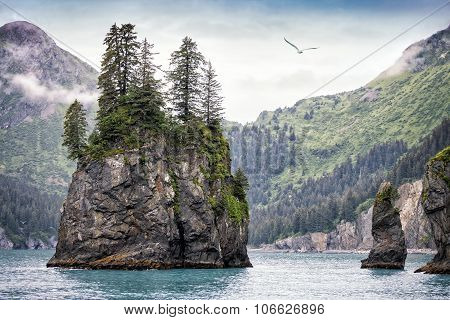 Foggy Day, Kenai Fjords National Park, Alaska