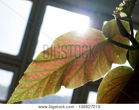 The green Leaf and sun background.