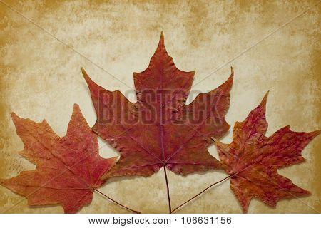 Three Maple Leaves on Gold Grunge Background