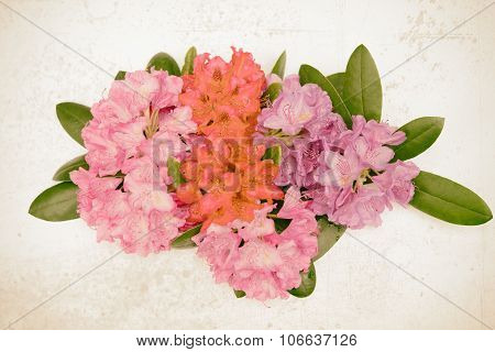 Aerial View Pink Red Lilac Rhododendron Blossoms Dark Background