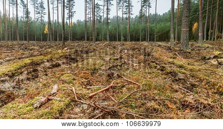 Plowed Land In The Forest