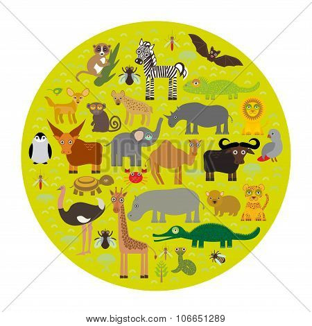 Animal Africa Parrot Hyena Rhinoceros Zebra Hippopotamus Crocodile Turtle Elephant Mamba Snake Camel