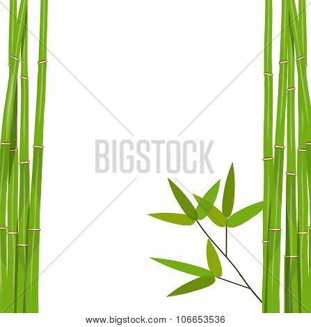 Colorful Stems and Bamboo Leaves. Vector Illustration.