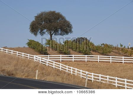 Fence in the Country