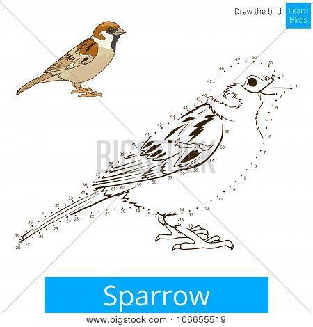 Sparrow bird learn to draw vector