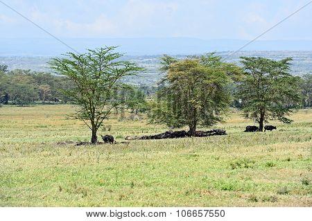 Buffalo Park Nakuru