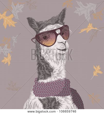 Lama On The Autumn Background In Sunglasses And Scarf