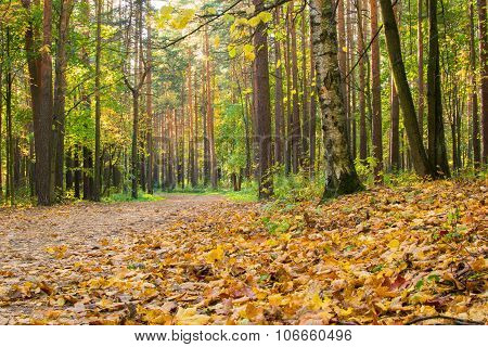 Autumn Forest Outdoors