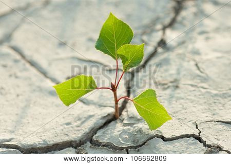 Young Plant Growing Through The Ground