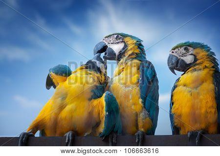 Large Macaw Parrots