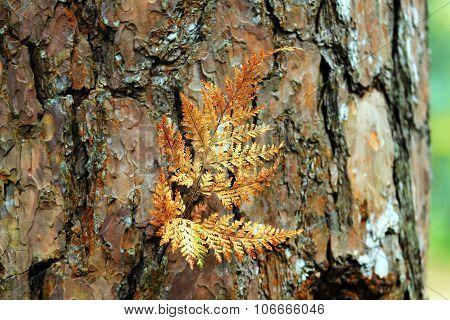 The Dry Fern Leaf On Bark