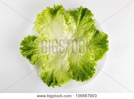 Healthy Eating. Fresh Green Lettuce In A Plate Isolated Over White Background