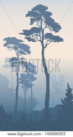 Vertical Illustration Of Forest With Tall Pines.