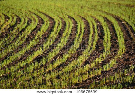 View Sown Fields , Southern Bohemia