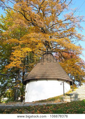 old well and yellow tree