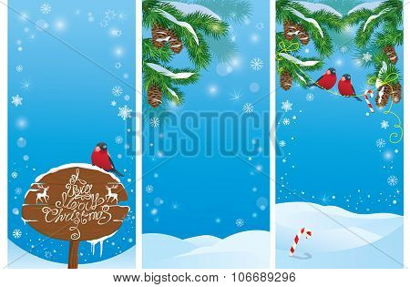 Set Of Vertical Banners With Fir Tree Branches And Bullfinch Birds On Light Blue Sky Background. Ima