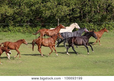 Herd Of Colorful Horses Galloping On The Meadow