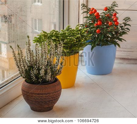 Household Ornamental Plants