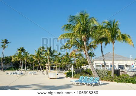 Tropical resort with chaise longs arranged in a row near palms on sandy beach, Florida, USA