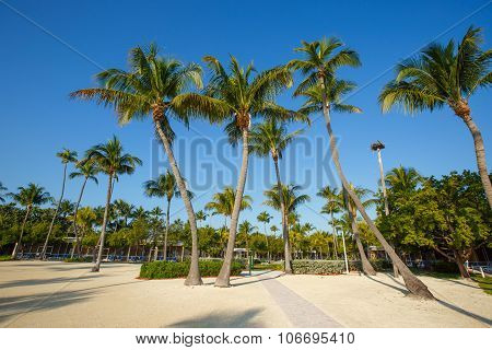 Tropical resort with coconut palms on sandy beach, Florida, USA