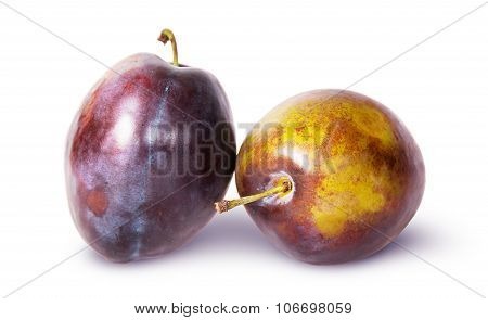 Supine And Standing Ripe Violet Plum