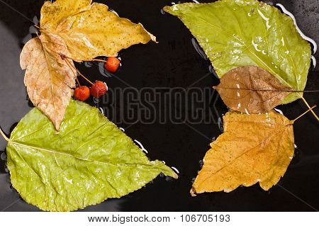 Autumn fallen leaves and wild apples into water on black surface