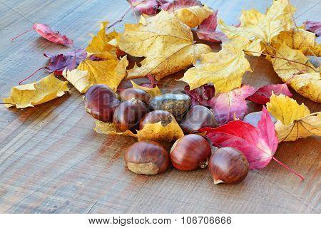 Sweet Chestnuts (castanea Sativa) Background