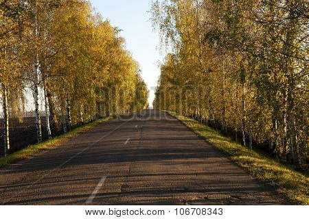Autumn road.  country