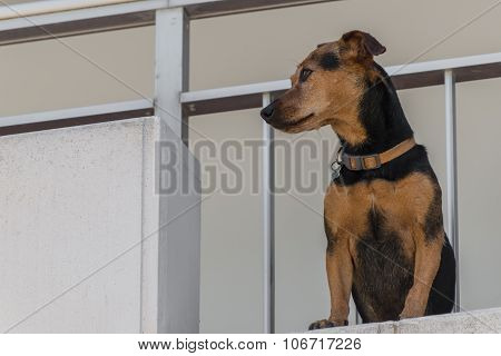 Residential loggia with waiting pet perfect for animal blogs websites and book covers