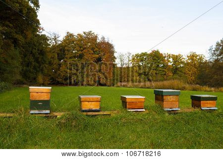 Beehive in grassland