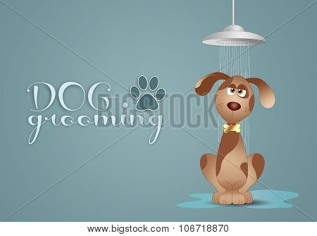 funny doggy under the shower