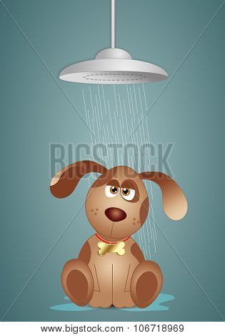 Doggy under the shower for grooming