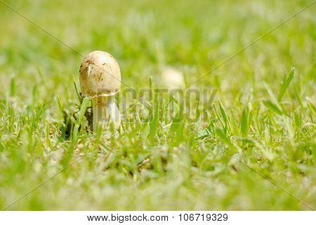 Mushroom on the floor, grow up on the meadow field
