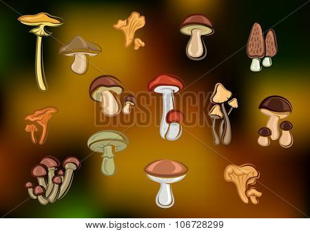Forest edible mushrooms set on blurred background
