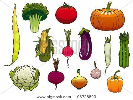 Fresh vegetables from the autumn harvest