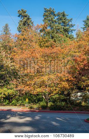 Seward Park -trees 4