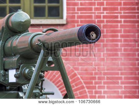Sparrow In The Gun