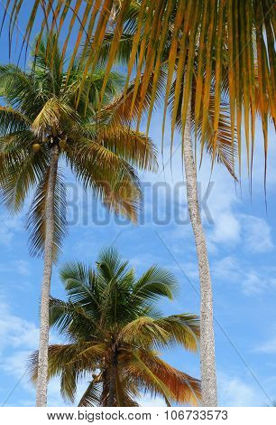 France, Sainte Anne In Guadeloupe