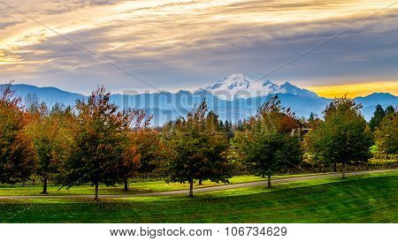 Sunrise over Mount Baker and a Tree Lined Lane